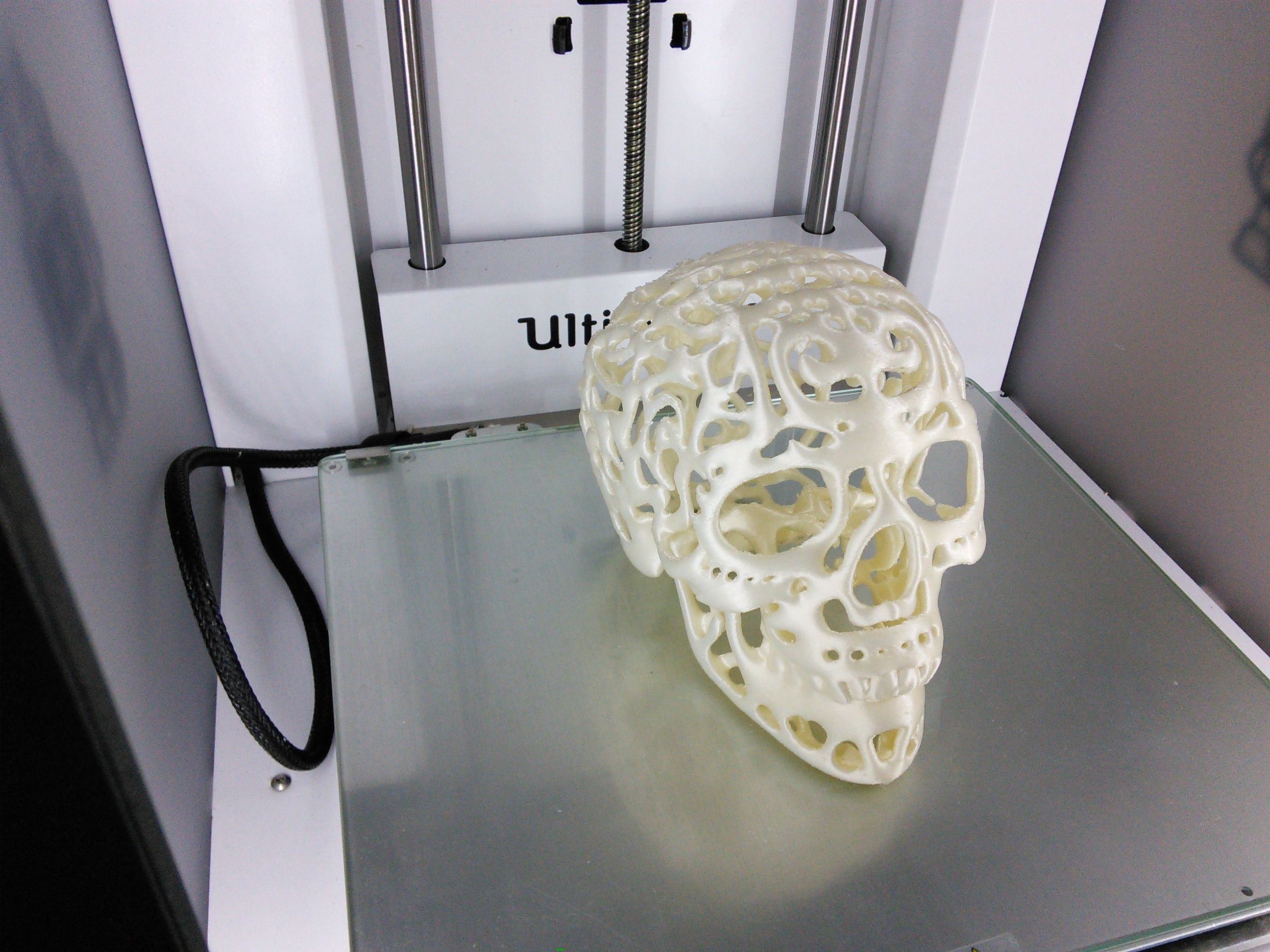 3D Printed Filigree Cranium by Dizingof on Ultimaker2 002